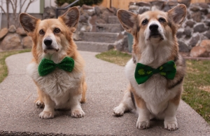 Mic & Moli Wish you Happy St Paddy's day (1 of 1)